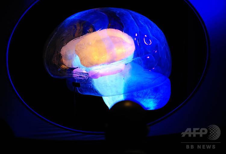 米自然史博物館で行われた脳内に関する展示(2010年11月16日撮影、資料写真)。(c)AFP PHOTO/Emmanuel Dunand