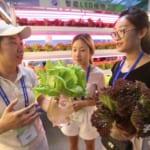 野菜を「LED工場」で生産、中国初の試み 北京