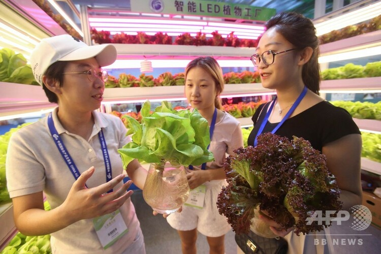 LED植物工場で栽培した農産品(2017年9月22日撮影、資料写真)。(c)CNS/陳暁根