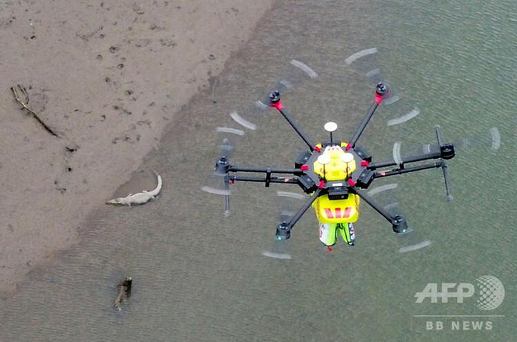 豪クイーンズランド州ケアンズの北で、川岸にいるワニの上空を飛ぶワニ探知用ドローン。ウエストパック・リトル・リッパー提供(2019年9月26日撮影、公開)。(c)AFP PHOTO / WESTPAC LITTLE RIPPER