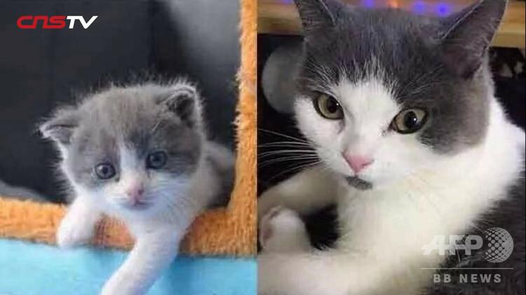 クローン猫「大蒜」と母体(右、動画の画像より)。(c)CNS