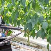 """""""ぶら下がって移動・収穫する自動収穫ロボットが登場"""