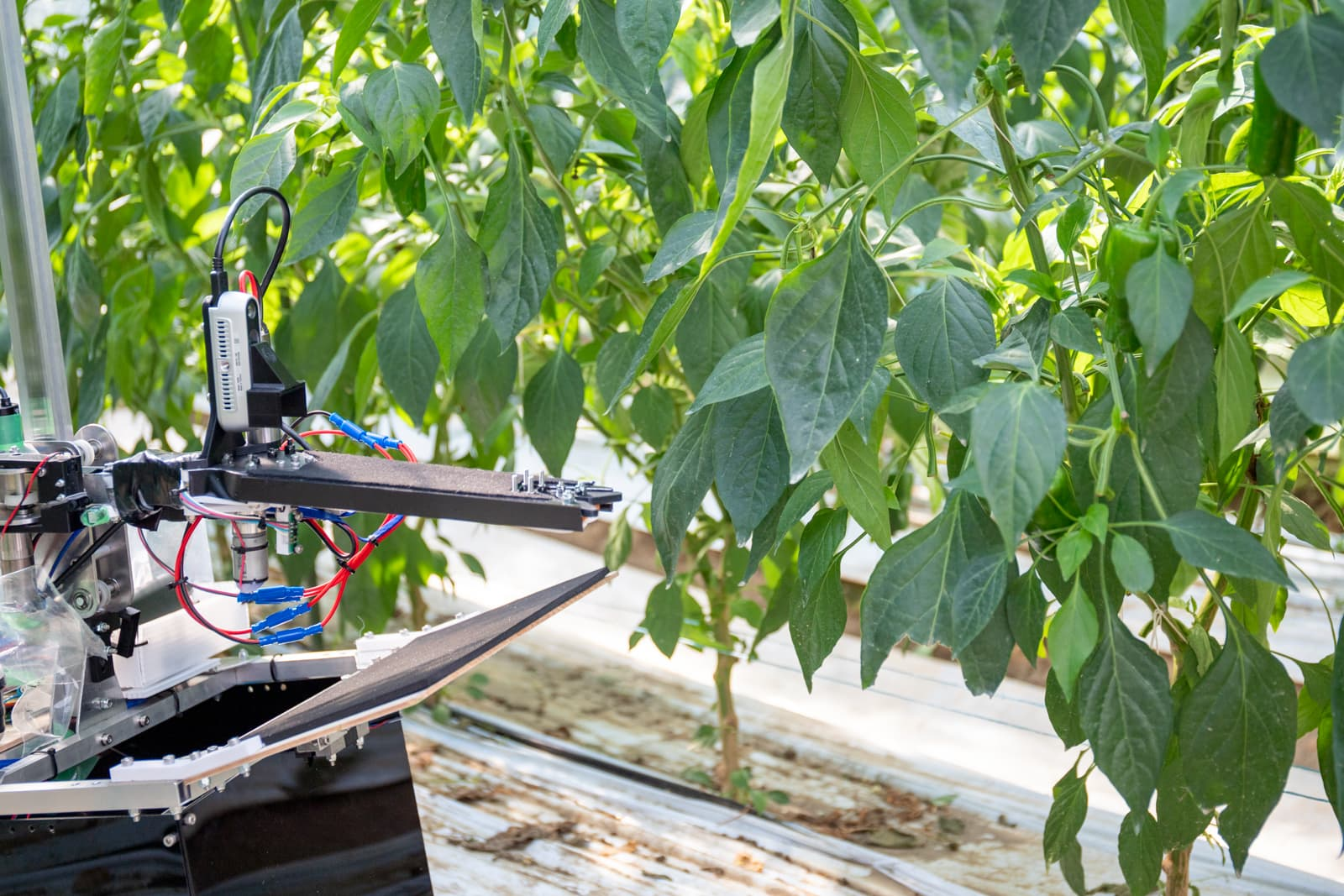 農場での運用がスタートしたAI活用の自動収穫ロボット(プレスリリースより)