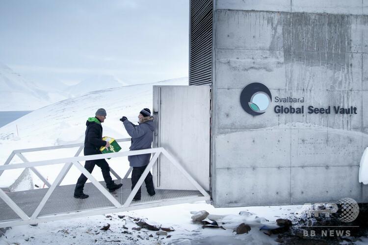 北極圏のノルウェー領スバルバル諸島スピッツベルゲン島にあるスバルバル世界種子貯蔵庫に種子が入った箱を運び込む人(2016年3月1日撮影、資料写真)。(c)Junge, Heiko / NTB Scanpix / AFP