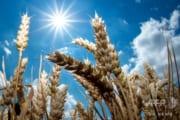 太陽光は新型コロナウイルスを急速に不活性化させるのか? 論文の公開求める声も