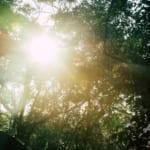太陽光でコロナ不活性化、米政府が公表 専門家からは慎重な判断が必要との声も