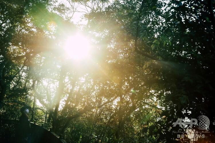 木々の隙間に差し込む太陽の光(2020年2月22日撮影、資料写真)。(c)VIVEK PRAKASH / AFP