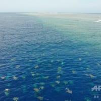 産卵のアオウミガメ、初めてドローンで個体数調査 豪レイン島
