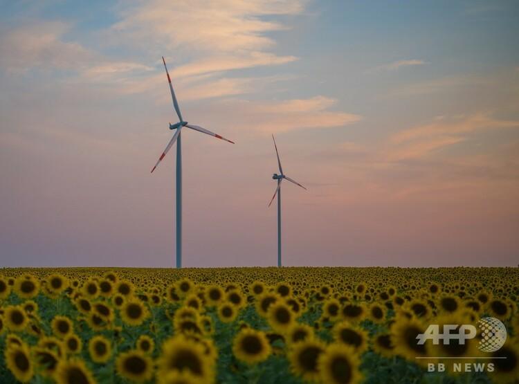 ドイツ東部ジーバースドルフのヒマワリ畑に立つ風力タービン(2018年7月5日撮影)。(c)Patrick Pleul / dpa / AFP