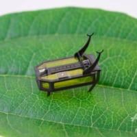 電池不要 メタノールで動く極小甲虫ロボットを開発 米研究