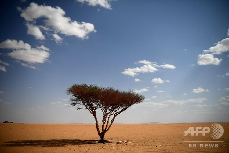 砂漠に生えた木(2019年10月18日撮影、資料写真)。(c)FRANCK FIFE / AFP