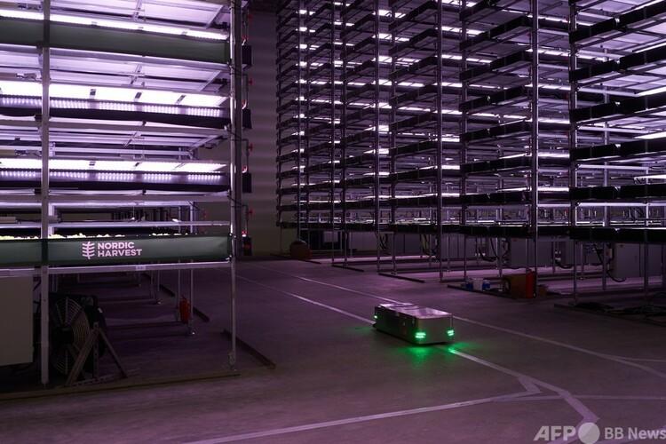 デンマーク・トストルプのノルディック・ハーベストの垂直農場で稼働する、種まきや野菜の生育監視用のロボット(2020年11月20日撮影)。(c)Thibault Savary : AFP