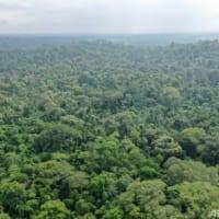 温暖化で2050年には森林がCO2放出源に 研究者らが警鐘