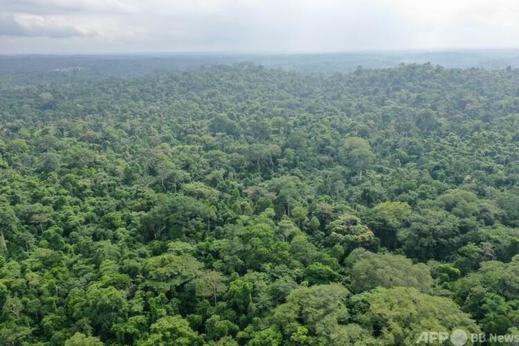 ナイジェリア・ラゴスの北西に位置する森林(2019年6月12日撮影、資料写真)。(c)GOMIS / AFP