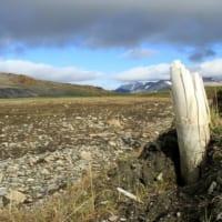 100万年前のマンモスのDNA解読 世界最古 シベリアで出土