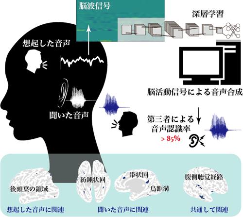 本研究の概念図( Advanced Intelligent Systemsより引用)