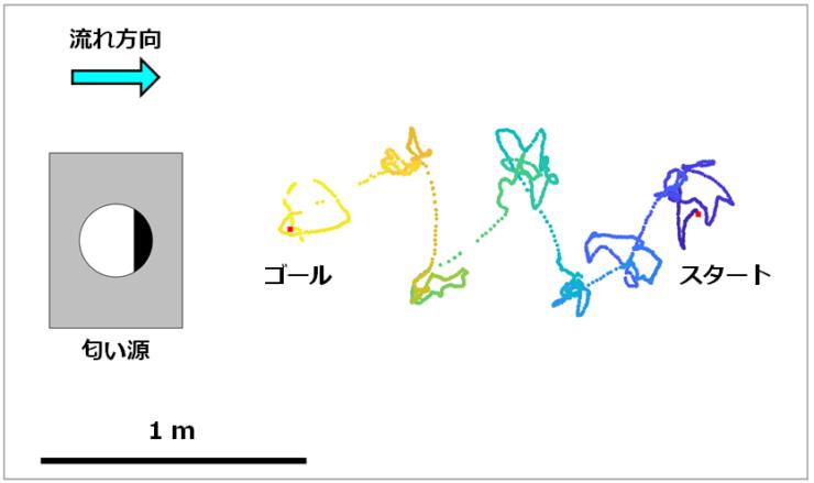 スパイラルサージアルゴリズムを用いたバイオハイブリッドドローンの匂い源定位実験の飛行軌跡