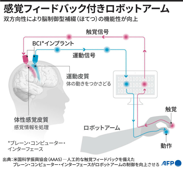感覚フィードバック付き脳制御型ロボットアームを示した図(2021年5月21日作成)。(c)AFP