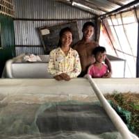 カンボジアの農家と取り組む コオロギ養殖でソーシャルインパクト創出
